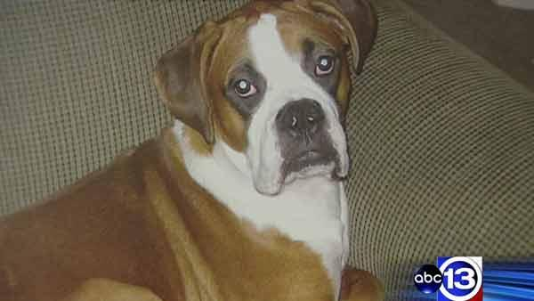 Dog stolen during home burglary
