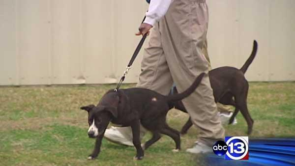 Program helps stray dogs, troubled kids get new start