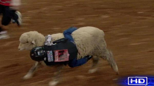 League City boy wins Mutton Bustin' event