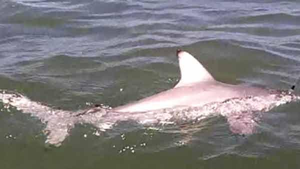 Boy, 9, reels in shark off Galveston Island