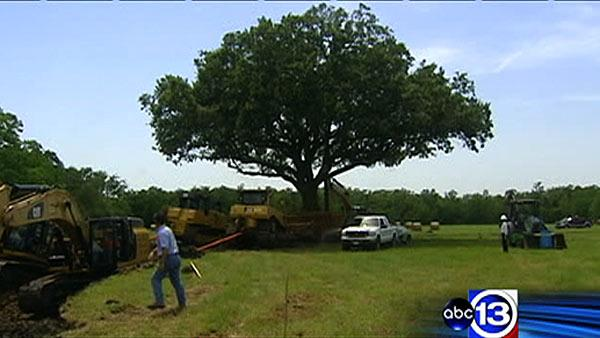 League City oak tree finally moved to new home