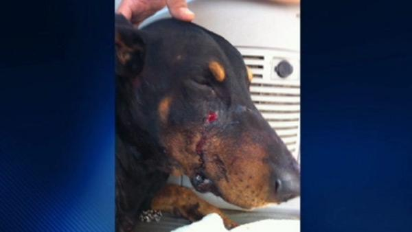 Dog shot while protecting his owner