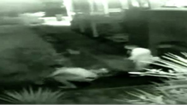 Surveillance video of suspects stealing Galveston rabbits