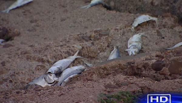Cleanup efforts underway for dead fish