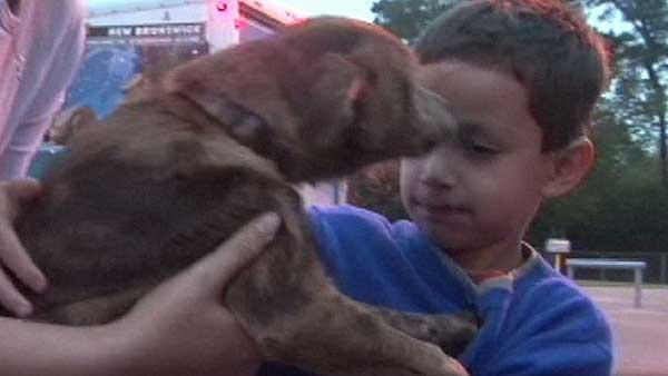 Boy reunites with dog following wreck