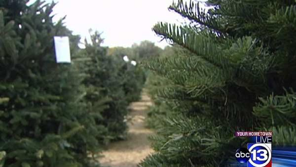 Christmas tree farm in Spring open for holidays