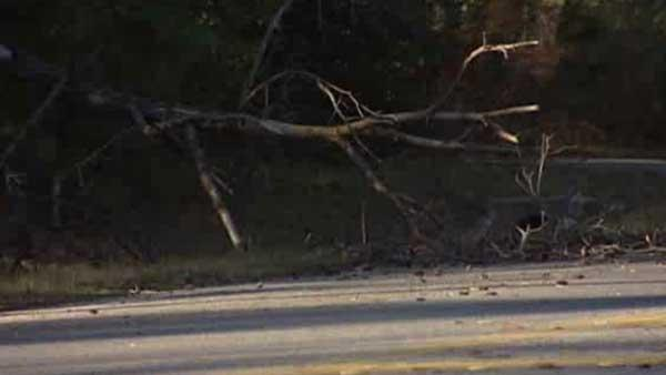 Toppling tree strikes, kills man in NW Harris Co.