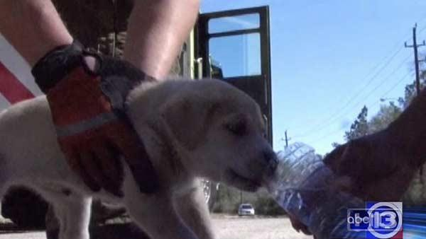 Family helps rescue puppy from manhole