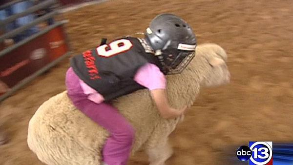 Mutton bustin' at the Houston Rodeo