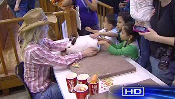 Bunnies draw big attention at Houston rodeo