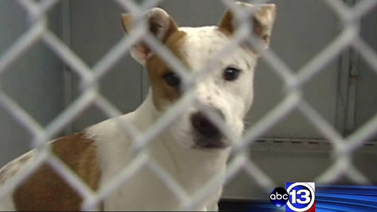 Parvo outbreak at Conroe Animal Shelter shuts down adoptions, ends up killing dozens of dogs