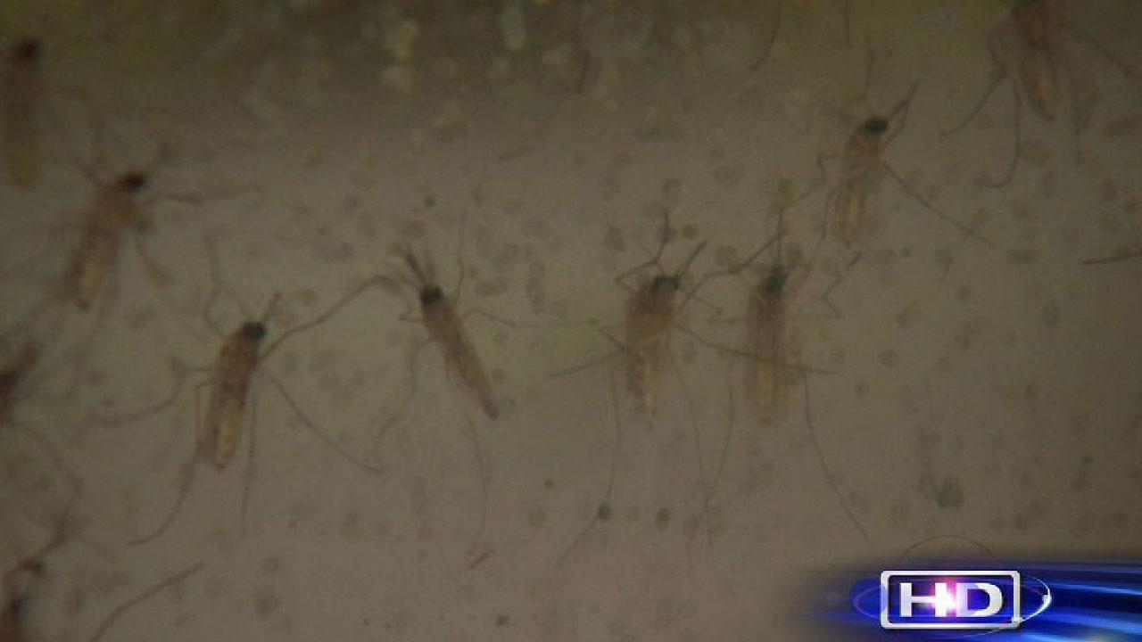 Mosquitoes are expected to be quite active until about mid-September