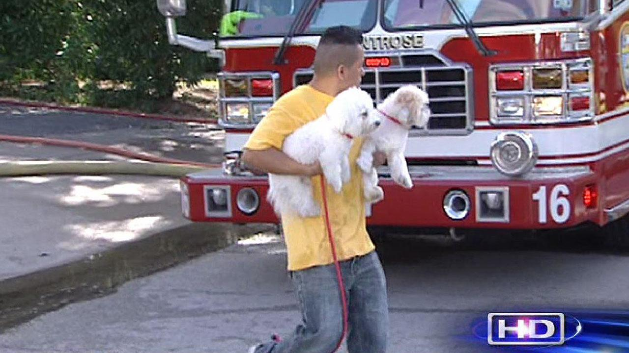 Dog rescued from house fire in SW Houston
