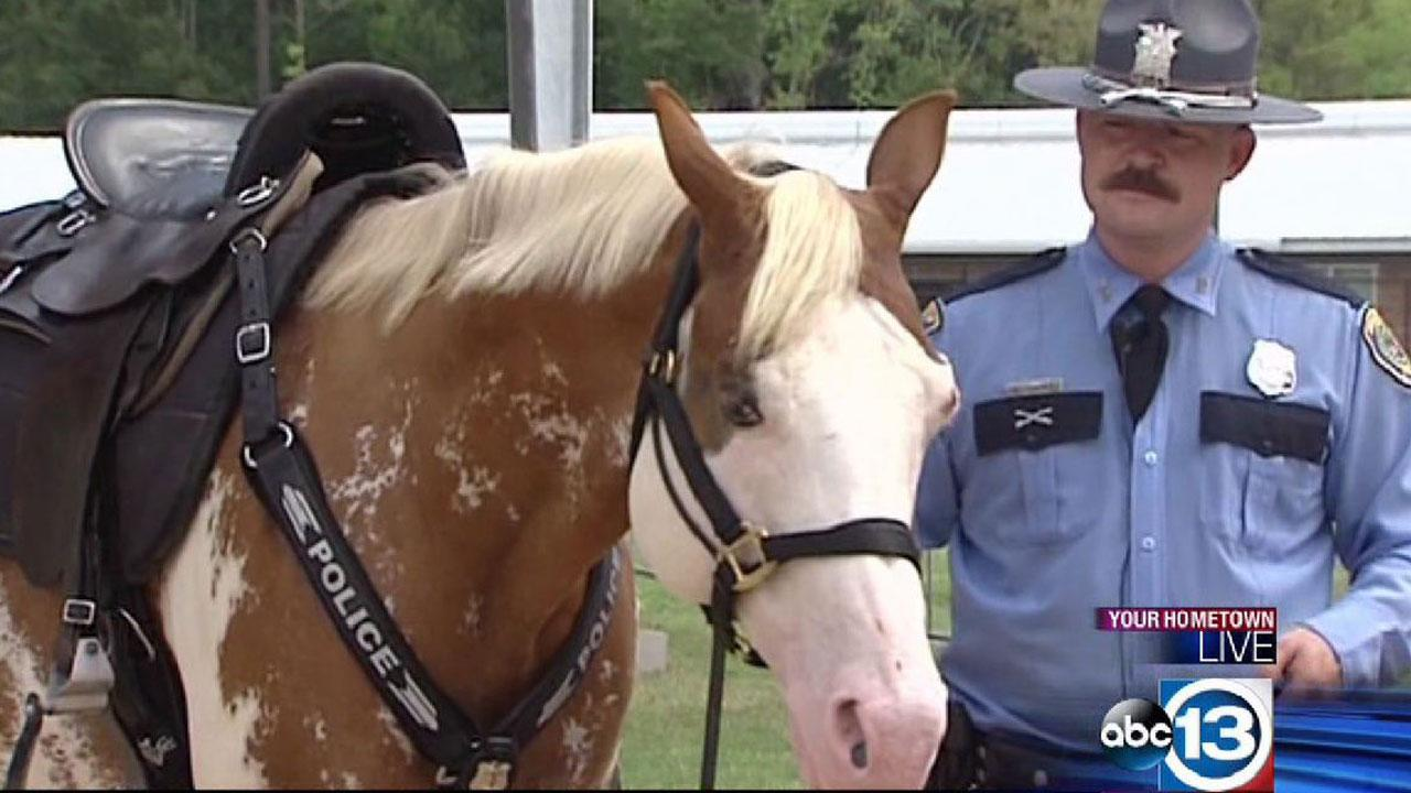 HPD horse Smash