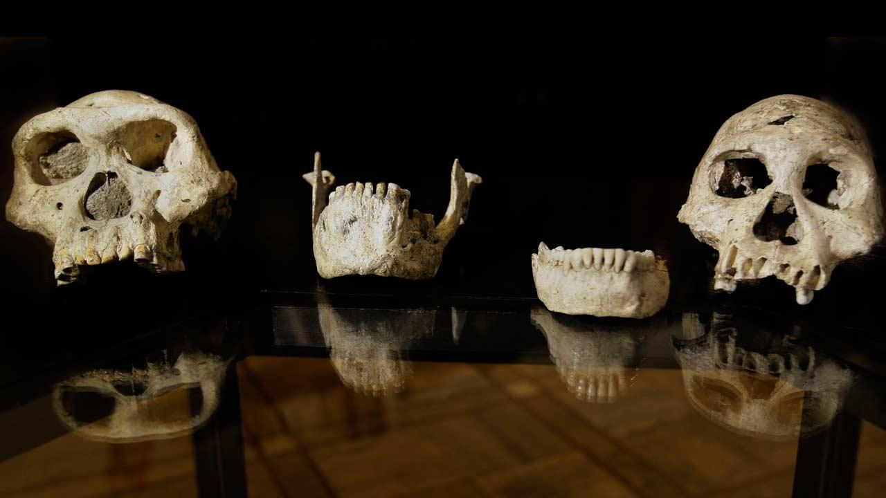 Early human skull