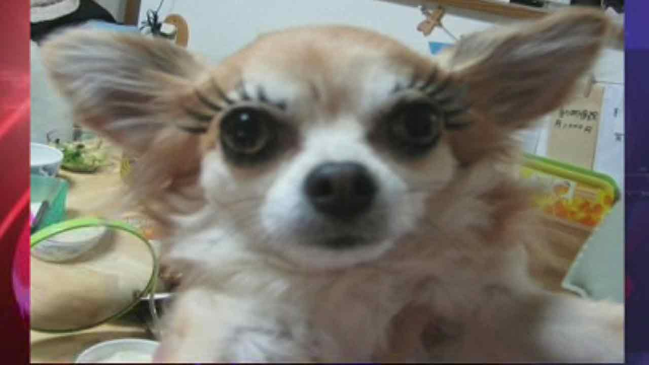 Dog eyelashes