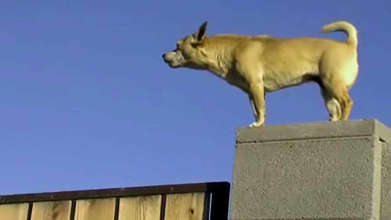 File image: Chihuahua