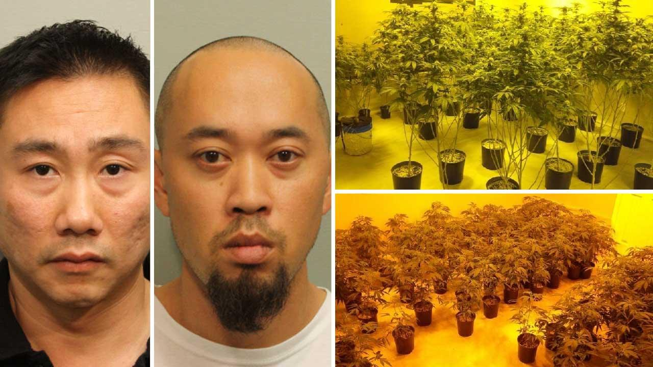 Marijuana grow house bust