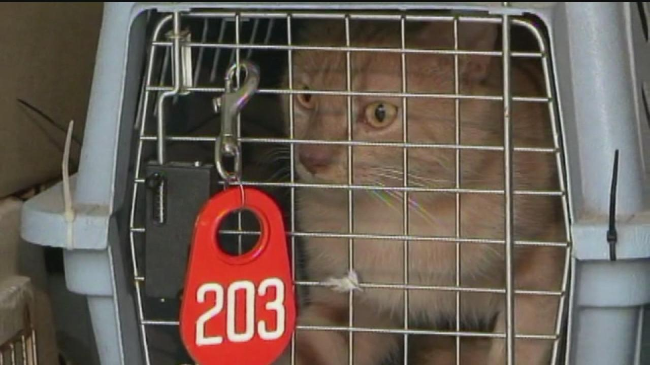 More than 100 cats found at Jersey Village home