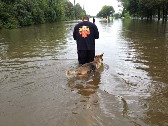 "<div class=""meta ""><span class=""caption-text "">These are just some of the photos sent in by you of the flooding in southeast Texas. We've got all of them at http://iwitness.abc13.com. And if you have photos or videos, send them to us at news@abc13.com  (Photo/iWitness Reports)</span></div>"