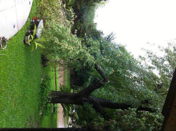 ABC13 viewers sent in their weather pictures from Thursday&#39;s storms. If you have photos and videos to share, you can email news@abc13.com or upload them here: http:&#47;&#47;iwitness.abc13.com&#47; <span class=meta>(KTRK Photo)</span>