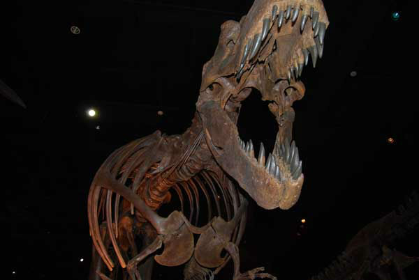 "<div class=""meta ""><span class=""caption-text "">The Houston Museum of Natural Science's $85 million Hall of Paleontology opens to the public on June 2. For more info, visit HMNS.org. (KTRK Photo)</span></div>"