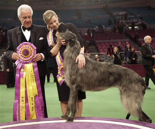 "<div class=""meta ""><span class=""caption-text "">Scottish deerhound Hickory poses for photographers with his handler Angela Lloyd, right, and judge Paolo Dondina after Hickory won best in show during the 135th Westminster Kennel Club Dog Show, Tuesday, Feb. 15, 2011, at Madison Square Garden in New York.   (AP Photo/ Mary Altaffer)</span></div>"