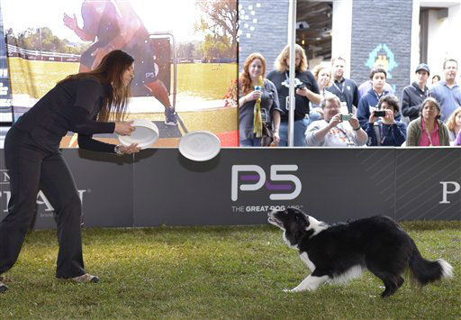 Pro Plan Performance Team member Melissa Heeter throws a disc for her dog, Faith, during Purina Pro Plan Bark by Bark West, Saturday, March 9, 2013, in Austin, Texas. The event was held to demonstrate the great potential in all dogs through training techniques and nutritional information featured in the new Purina Pro Plan P5 mobile application.  <span class=meta>(Photo&#47;Darren Abate)</span>