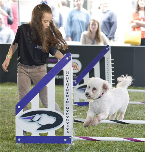 IMAGE DISTRIBUTED FOR PURINA PRO PLAN - Caroline Kim, daughter of social media expert Peter Kim, leads her dog, Max, through an agility course during Purina Pro Plan Bark by Bark West, Saturday, March 9, 2013, in Austin, Texas. The event was held to demonstrate the great potential in all dogs through training techniques and nutritional information featured in the new Purina Pro Plan P5 mobile application. &#40;Photo by Darren Abate&#47;Invision for Purina Pro Plan&#47;AP Images&#41; <span class=meta>(Photo&#47;Darren Abate)</span>