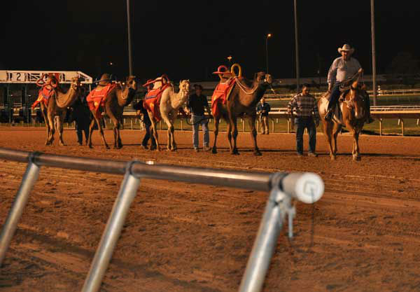 "<div class=""meta image-caption""><div class=""origin-logo origin-image ""><span></span></div><span class=""caption-text"">It wasn't a typical Saturday night at the Sam Houston Race Park. People of all ages packed into the sold-out park to watch camels and ostriches race a distance of approximately 100 yards in between horse races. (ABC Photo/ Mena El-Sharkawi)</span></div>"
