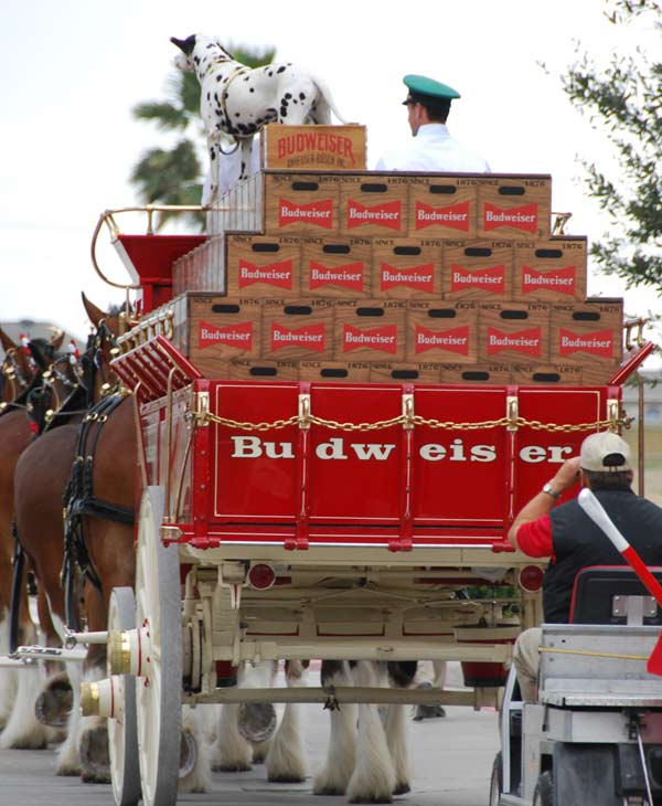 "<div class=""meta ""><span class=""caption-text "">The famous Budweiser Clydesdales made an appearance at the Pearland Town Square on Thursday (KTRK/Blanca Beltran)</span></div>"