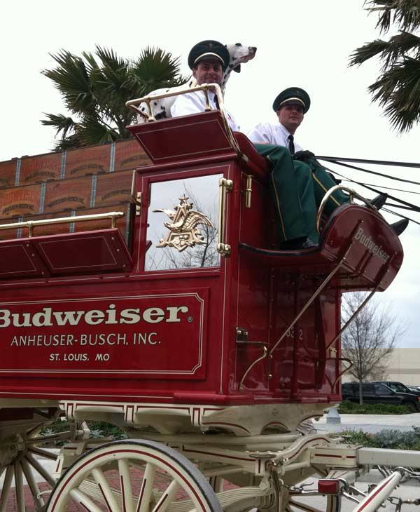 The famous Budweiser Clydesdales made an appearance at the Pearland Town Square on Thursday