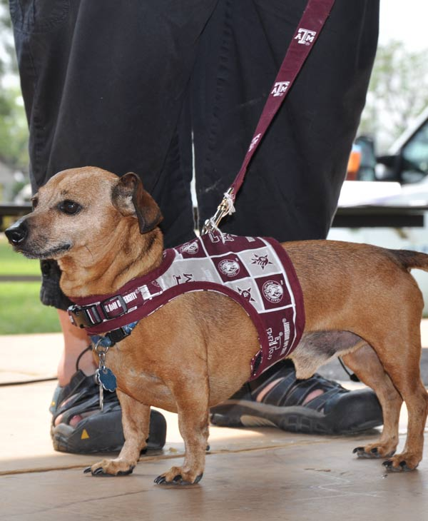 "<div class=""meta ""><span class=""caption-text "">'Paws in the Park' was held in Pearland to support animal adoption over the weekend (Photo by: Blanca Beltran)  (KTRK)</span></div>"
