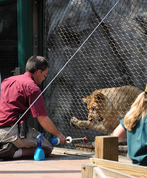 "<div class=""meta image-caption""><div class=""origin-logo origin-image ""><span></span></div><span class=""caption-text"">Cast members from CATS visit the big cat exhibit at the Houston Zoo Friday.  Zoo goers got to mingle with the cast and get face painting for the kids and learn all about the big cats at the zoo. (KTRK)</span></div>"
