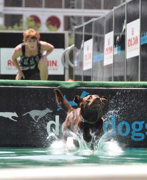 "<div class=""meta ""><span class=""caption-text "">Many came out to check out the national tour dog jumping competition held at Discovery Green over the weekend.   (KTRK/Blanca Beltran)</span></div>"
