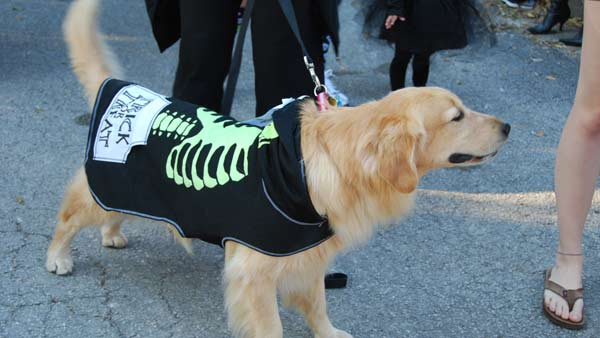 "<div class=""meta image-caption""><div class=""origin-logo origin-image ""><span></span></div><span class=""caption-text""> The 4th Annual Bellaire Parks and Rec ""Howl""-O-Ween dog parade and Costume contest was held Saturday (KTRK)</span></div>"