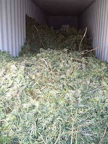 "<div class=""meta ""><span class=""caption-text "">The sophisticated marijuana growing operation included tons of plants, an irrigation system, guard stations and more evidence that officials collected. (Photo/Liberty County Sheriff's Office)</span></div>"
