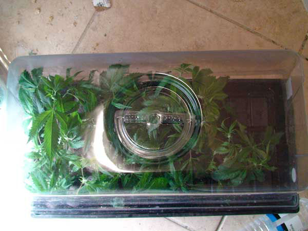 "<div class=""meta image-caption""><div class=""origin-logo origin-image ""><span></span></div><span class=""caption-text"">Photos released by Pearland police of what they say was a sophisticated pot-growing operation. (Photo/Pearland police)</span></div>"