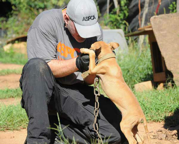 These photos of the dogs in Alabama were provided to us by the ASPCA.  They say 114 dogs were seized in the raid Friday <span class=meta>(Photo&#47;ASPCA)</span>