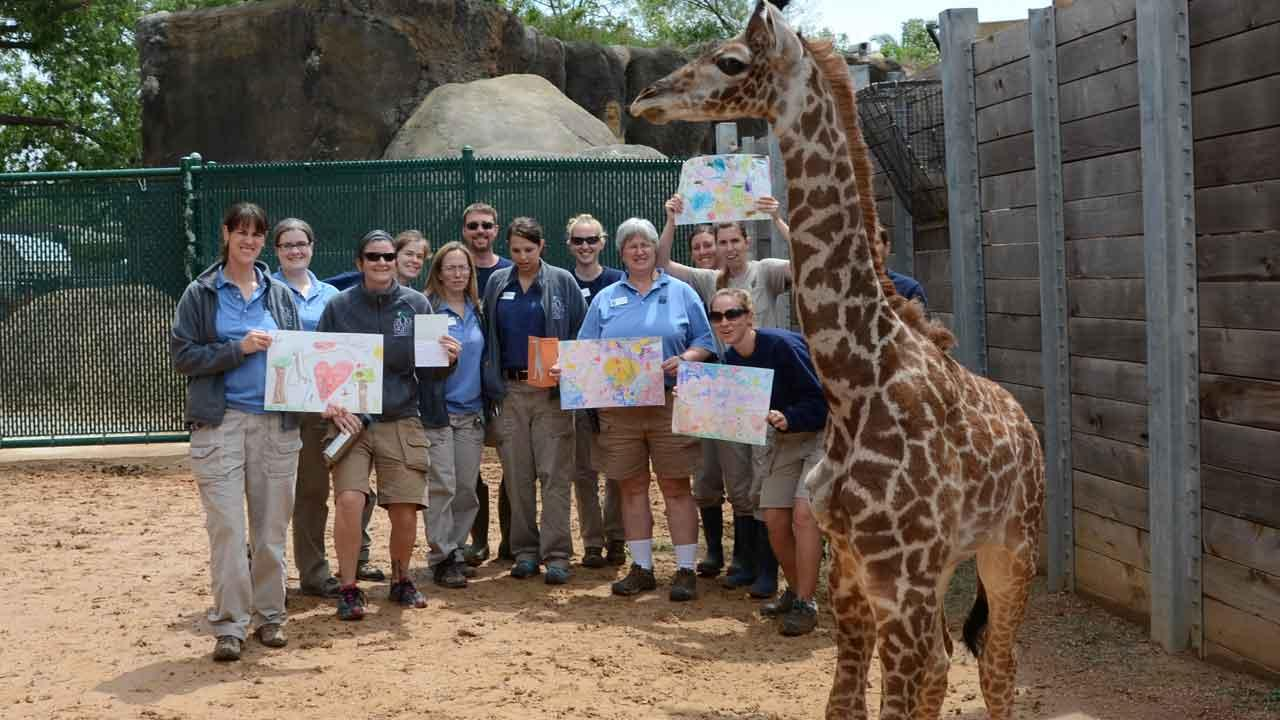 Yao, the baby giraffe at the Houston Zoo, is improving after a life-threatening bone infection