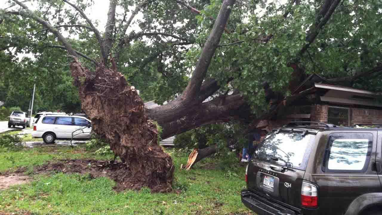 Winds near Oak Forest tore a tree from its roots, sending it toppling into a home