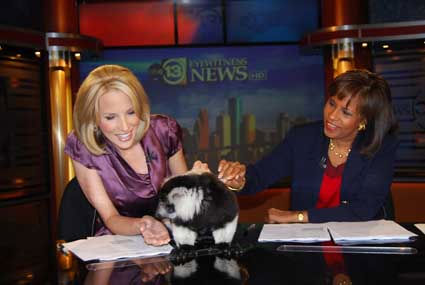 SeaWorld handlers dropped by the ABC13 studios with a few critters who hung out on set with anchors Melanie Lawson and Ilona Carson