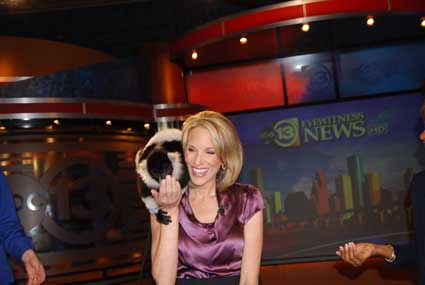 "<div class=""meta image-caption""><div class=""origin-logo origin-image ""><span></span></div><span class=""caption-text"">SeaWorld handlers dropped by the ABC13 studios with a few critters who hung out on set with anchors Melanie Lawson and Ilona Carson</span></div>"