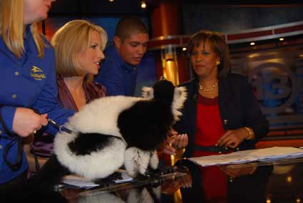 "<div class=""meta ""><span class=""caption-text "">SeaWorld handlers dropped by the ABC13 studios with a few critters who hung out on set with anchors Melanie Lawson and Ilona Carson</span></div>"