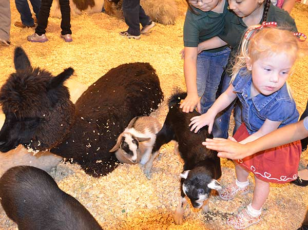 "<div class=""meta image-caption""><div class=""origin-logo origin-image ""><span></span></div><span class=""caption-text"">The Houston Livestock Show and Rodeo has a kid-focused area that offers fun for all with a petting zoo, vendors, livestock, the antique double carousel, the kid's carnival and so much more. (KTRK/Blanca Beltran)</span></div>"