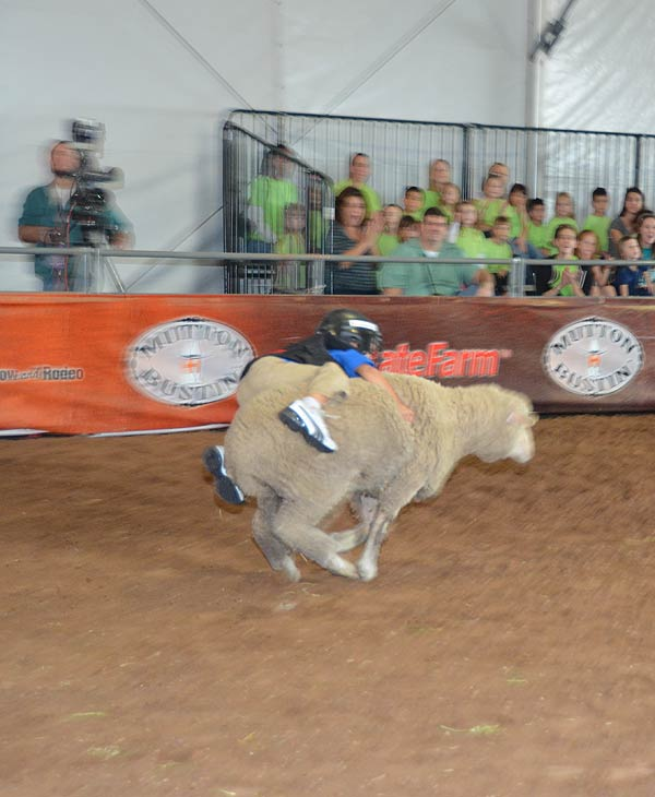 "<div class=""meta image-caption""><div class=""origin-logo origin-image ""><span></span></div><span class=""caption-text"">Mutton Bustin' is an exciting part of the Houston Livestock Show and Rodeo.  Kids can take part of the mutton bustin' competition in the in Kids Country area. (KTRK/Blanca Beltran)</span></div>"