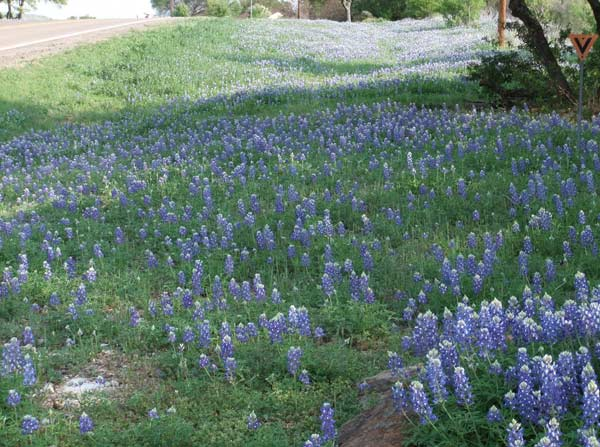 "<div class=""meta ""><span class=""caption-text "">Viewers captured photos in the Texas bluebonnets.   Email your pics to us at news@abc13.com or upload them here.   (KTRK)</span></div>"