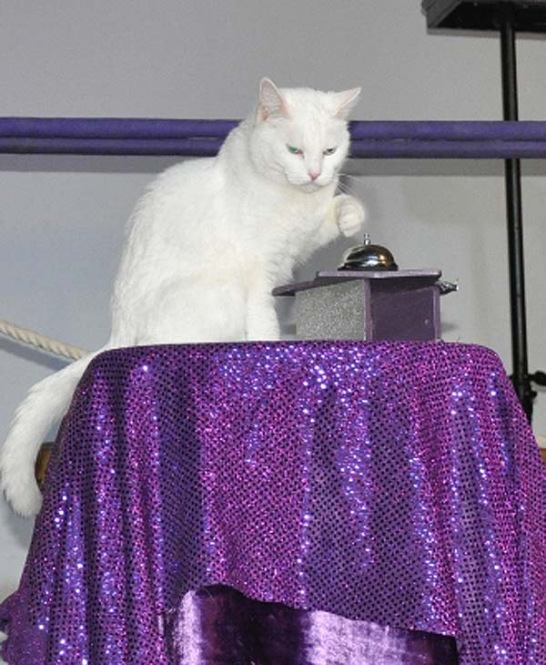 "<div class=""meta ""><span class=""caption-text "">Ordinary housecats get trained to do extraordinary things at the amazing Acro-Cats show.  These photos are from the show at Super Happy Fun Land on Thursday, September 29. (KTRK/Kristy Gillentine)</span></div>"