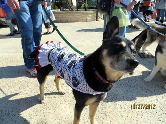 "<div class=""meta image-caption""><div class=""origin-logo origin-image ""><span></span></div><span class=""caption-text"">ABC13 Meteorologist Casey Curry had the tough weekend task of being a judge at the Howl-O-Ween Dog Walk in in Katy.  Dressed-up dogs were judged alone and with their owners.  The event raised funds for homeless animals.  If you were there, we want to see your photos.  Email them to us at news@abc13.com.  And Happy Halloween!       (Photo/Russ Thompson)</span></div>"