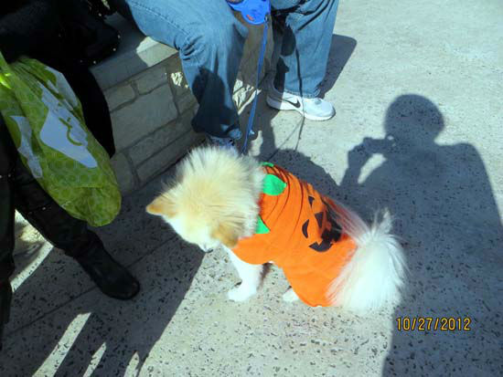 ABC13 Meteorologist Casey Curry had the tough weekend task of being a judge at the Howl-O-Ween Dog Walk in in Katy.  Dressed-up dogs were judged alone and with their owners.  The event raised funds for homeless animals.  If you were there, we want to see your photos.  Email them to us at news@abc13.com.  And Happy Halloween!       <span class=meta>(Photo&#47;Russ Thompson)</span>